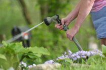 Consejos sobre Cómo Regar las Plantas