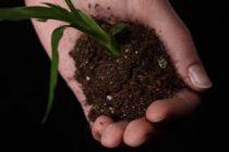 Como saber cuando trasladar de maceta una planta