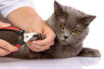 Cómo cortar las uñas de un gato