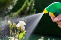 Remedio Casero para Eliminar las Plagas del Jardín