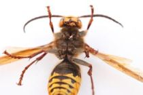 Cómo evitar que las avispas o abejas nos piquen