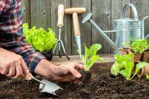 Cómo Cuidar una Huerta