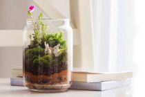 Guia para construir un terrario. Qué es un terrarium o cómo crearlo. Mantenimiento del terrarium