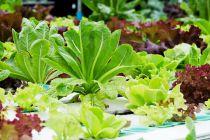 Cómo hacer un Jardín Hidropónico