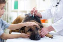 Cuando se debe vacunar a los perros