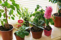 Consejos para que las plantas esten siempre verdes. Cómo cuidar las plantas y mantenerlas en buen estado. Tips para el mantenimiento de las plantas