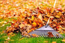 Como limpiar el jardín de hojas secas
