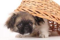 Como conocer la personalidad de un cachorro