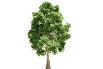 Cómo Elegir Árboles de Crecimiento Rápido