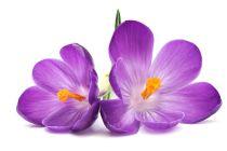 Cómo utilizar las propiedades de la violeta