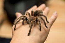 Cómo Tener a una Araña de Mascota