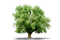 Cómo Elegir los árboles según su Forma