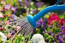 Consejos para Regar las Plantas