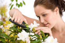 Cómo Cortar las Flores