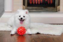 Juguetes para perros, ¿cómo elegirlos?. Consejos para elegir los juguetes para perros. Juguetes seguros para nuestra mascota