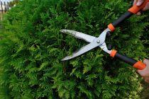 Consejos para Limpiar y Podar las Plantas del Jardín