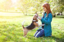 Cuidados de una Mascota luego de un Día al Aire Libre