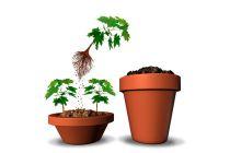 Cómo cambiar de maceta a las plantas