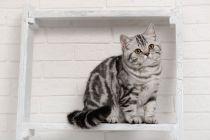 Cómo hacer estantes para gatos