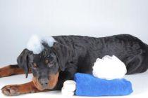Cómo bañar a nuestra mascota sin mojarla