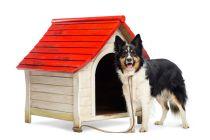 Cómo preparar el canil del perro en invierno