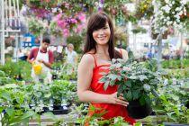 Cómo elegir las mejores plantas antes de comprar