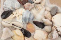 Cómo Tratar Conchas y Caracolas con Vinagre