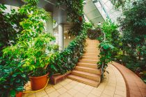 Cómo Dividir Ambientes con Plantas
