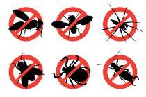 Cómo Evitar Insectos en el Hogar