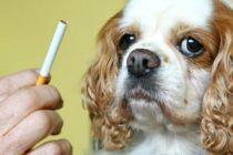El humo del tabaco daña a las mascotas