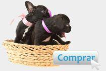 Consejos para comprar una mascota por Internet