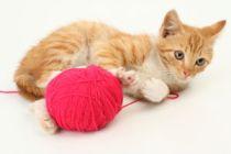 Cómo jugar con el gato