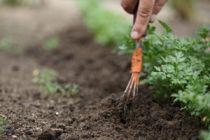 Cómo mejorar la tierra de macetas y jardines