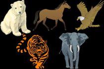 Características de los animales totémicos