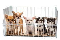 Cómo comprar un perro