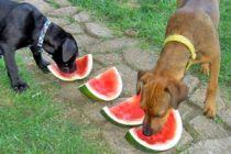 7 alimentos que nunca debes darle a tu perro