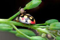 Identificar Plagas en las Plantas de Interior