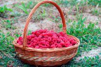 Alimentos que Cuidan el Cabello en Verano
