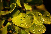 Sistema de riego casero para las plantas