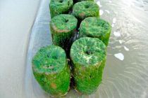 Las Mejores Algas Comestibles