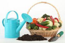 Cómo hacer Fertilizante Natural