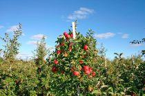 Cómo Cultivar Árboles Frutales