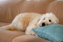 Consejos para quitar el olor a perro. Cómo eliminar el olor a perro de los ambientes. Tips para quitar el aroma a perro