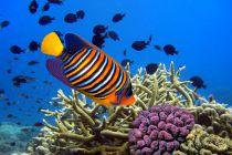 Significado de soñar con peces. Cómo interpretar los sueños con peces. Claves para entender los sueños con peces y pescados