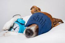 ¿Qué Significa Soñar con Perros?