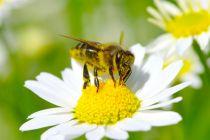 Significado de soñar con abejas. Cómo interpretar los sueños con abejas. Claves para entender los sueños con abejas, colmenas y miel