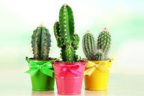 Plantas y flores para atraer energías positivas al hogar. Qué plantas colocar en los ambientes para atraer energías positivas.