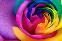 Cómo darle color a las flores blancas. Método para colorear flores. Cómo cambiar el color de las flores blancas