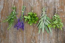 6 especies de plantas para hacer tratamientos de belleza caseros. 6 plantas para tratamientos de belleza en casa. Plantas para usar en belleza