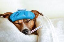 Cómo Medicar a un Perro